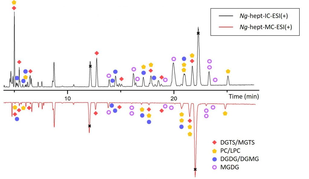 New paper published in Algal Research on the analysis of the bead milling impact on the lipid profile of the microalgae Microchloropsis gaditana by LC-MS